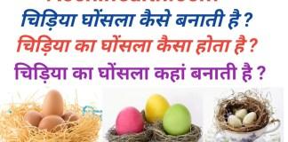 चिड़िया घोंसला कैसे बनाती है ? Chidiya Ghonsala Kaise banati hai .