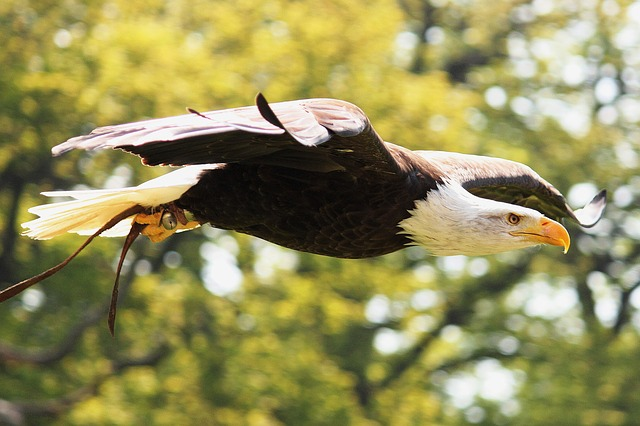 Romania, White tailed Eagle - Countries for Kids - CASE OF ADVENTURE .com