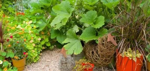 idei de amenajare a gradinii 2015 foodscaping
