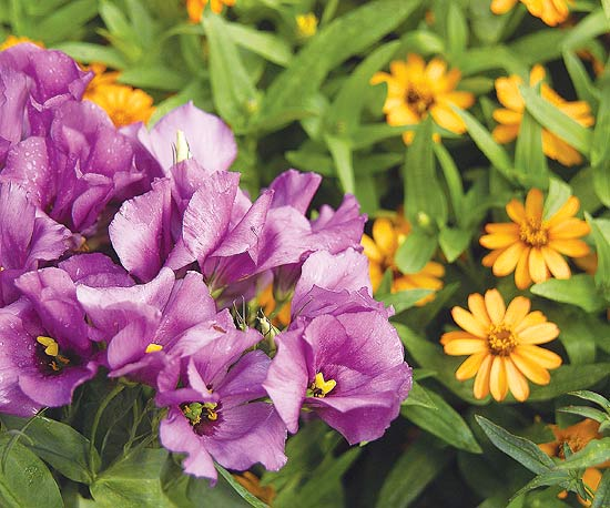 Cele mai bune combinatii de flori pentru jardiniere la oras