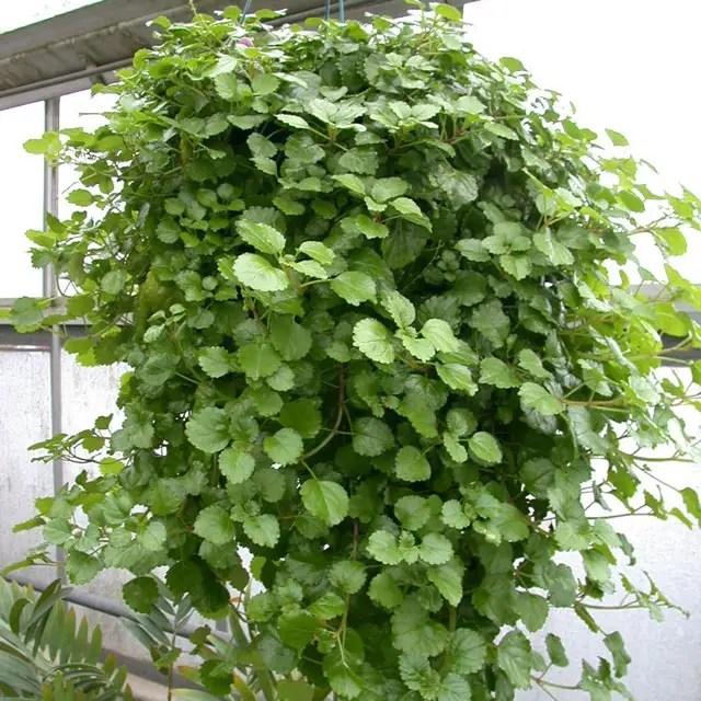 Plante care nu au nevoie de lumina for Plante de interior