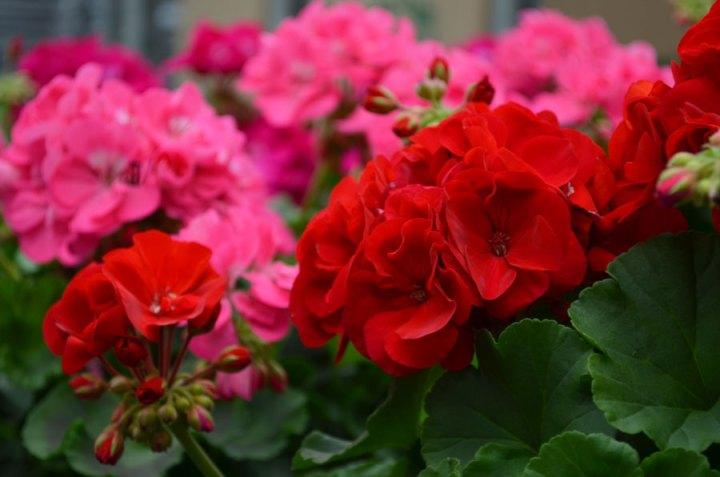 Plante care infloresc tot anul in gradina