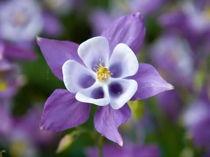 Flori care simbolizeaza speranta si puterea ca mesaj