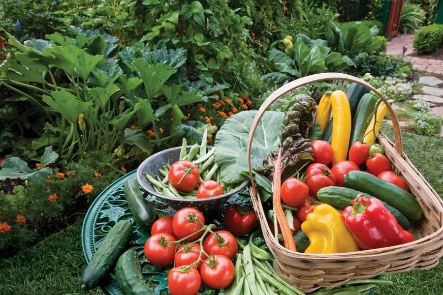 Gradinarit organic acasa
