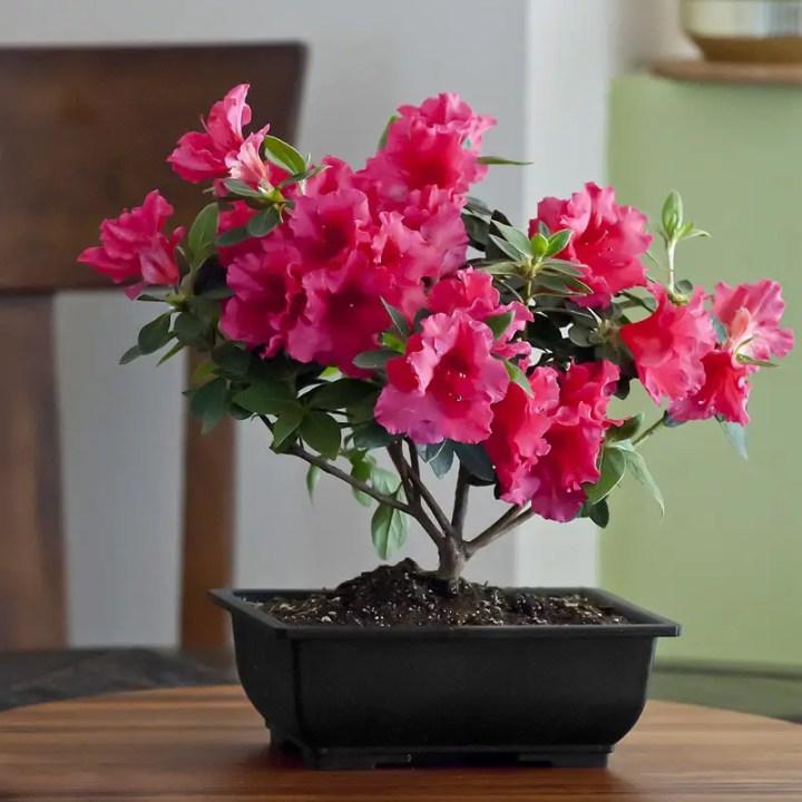 Plante potrivite pentru baie acasa