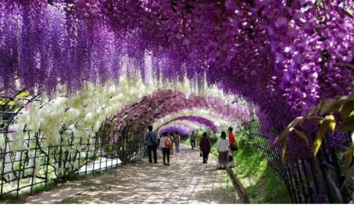 Plante cataratoare cu flori parfumate pe terasa