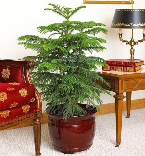 Plante de interior usor de ingrijit acasa