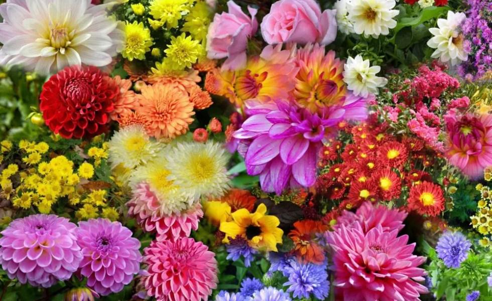 Flori de gradina care infloresc toamna frumos