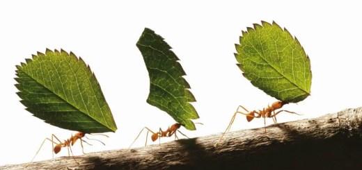 Cum scapati de furnici in cativa pasi simpli si rapizi