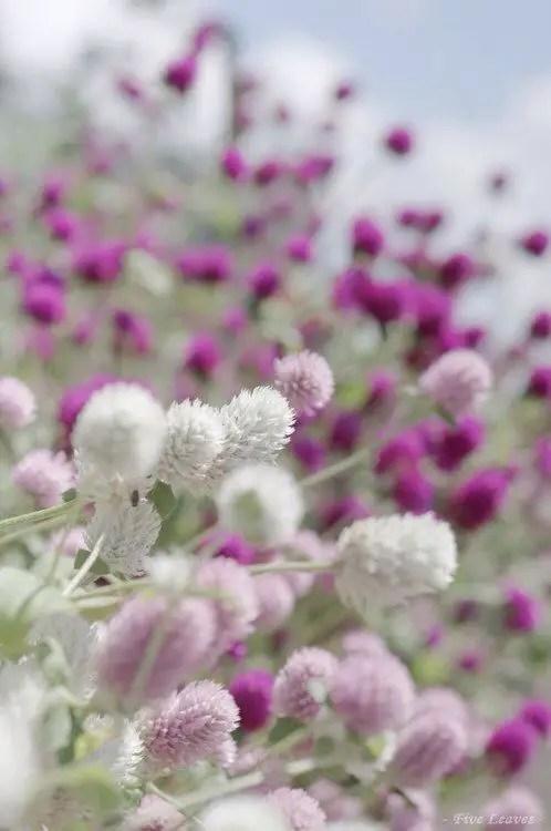 cele mai frumoase aranjamente cu imortele Best dried flower arrangements 9