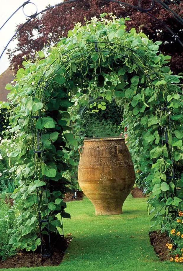 Decorative vegetable garden ideas - stylish green on Vegetable Garden Ideas For Backyard id=73651