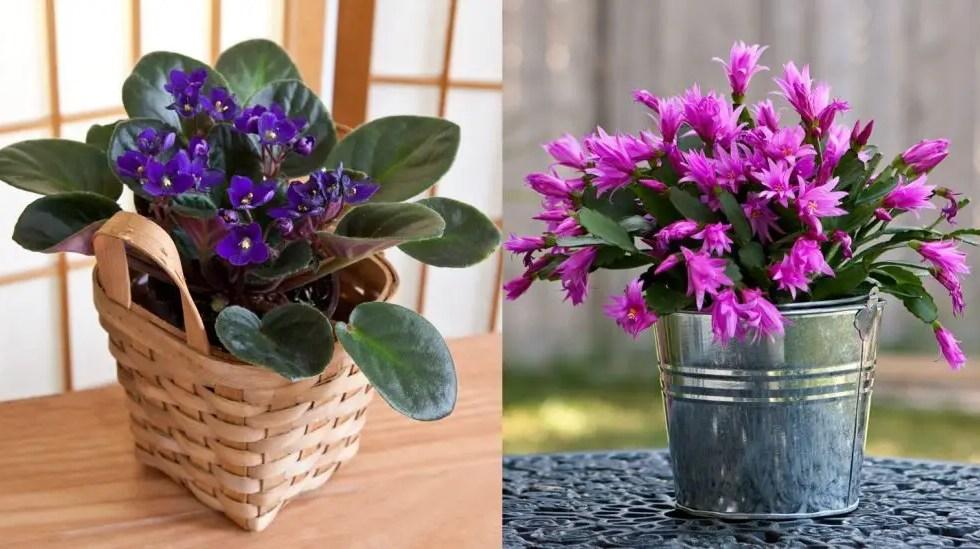 cele mai rezistente flori de camera natura fara pretentii case practice. Black Bedroom Furniture Sets. Home Design Ideas