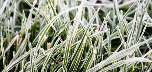 Ingrijirea gazonului iarna cu atentie