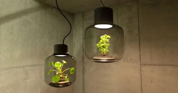 Lampile in care cresc plante - adevarate micro-ecosisteme