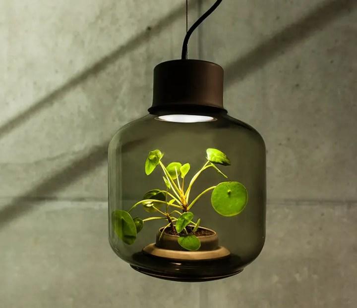 Lampile in care cresc plante usor