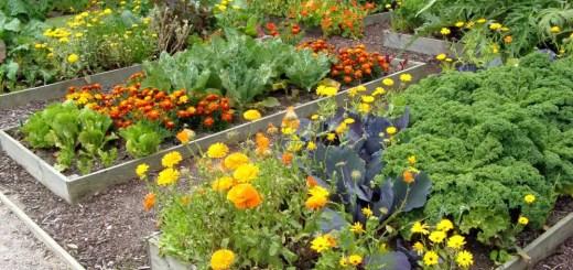 Plantele companion in gradina