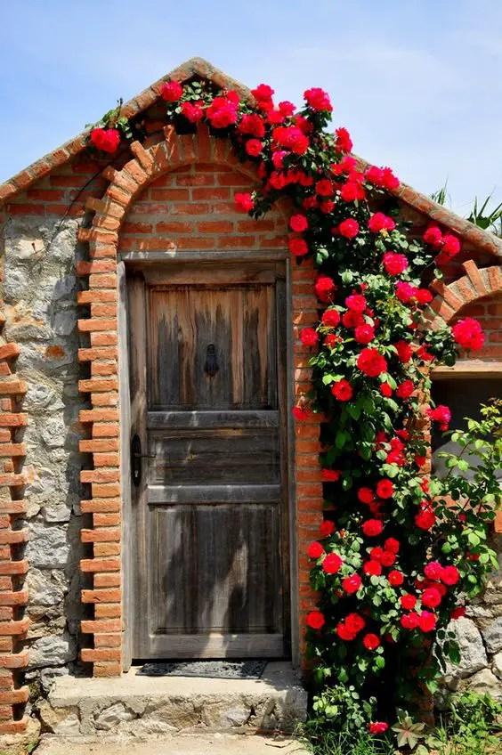 bolte pentru trandafiri cataratori Climbing rose trellis 10