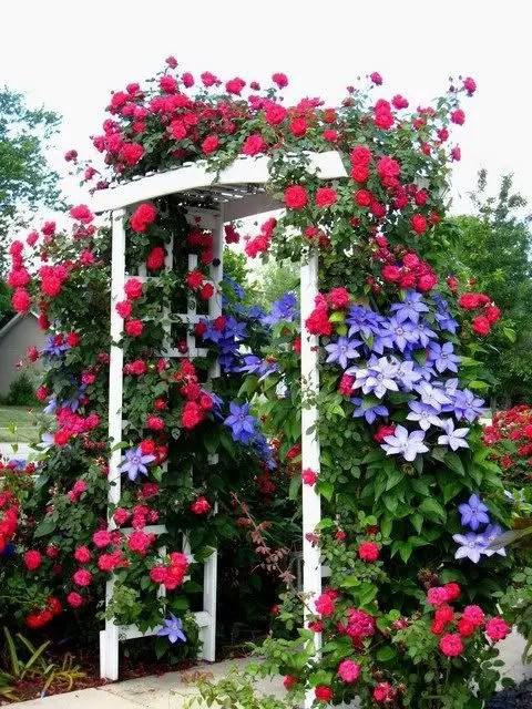 bolte pentru trandafiri cataratori Climbing rose trellis 3