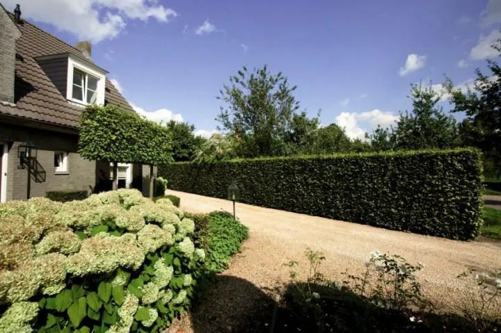 Garduri modulare cu plante - un adevarat paravan ecologic