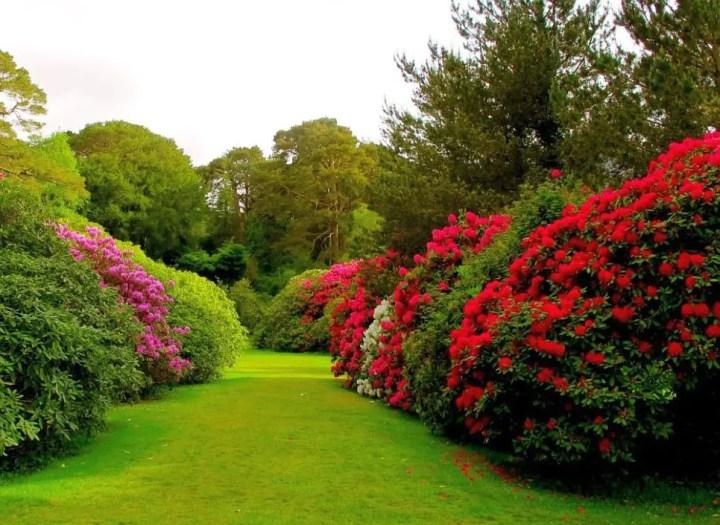 gradini amenajate cu gazon si flori Flower and lawn landscaping ideas 10