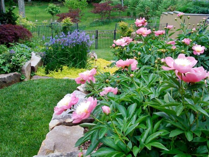 gradini amenajate cu gazon si flori Flower and lawn landscaping ideas 7