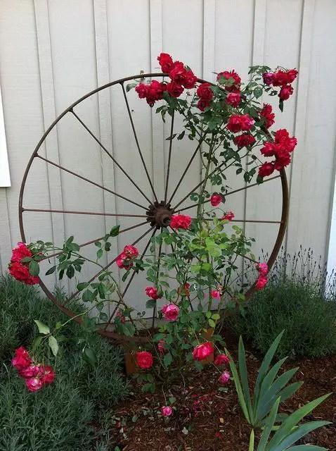 gradini rustice cu flori Rustic flower gardens 17