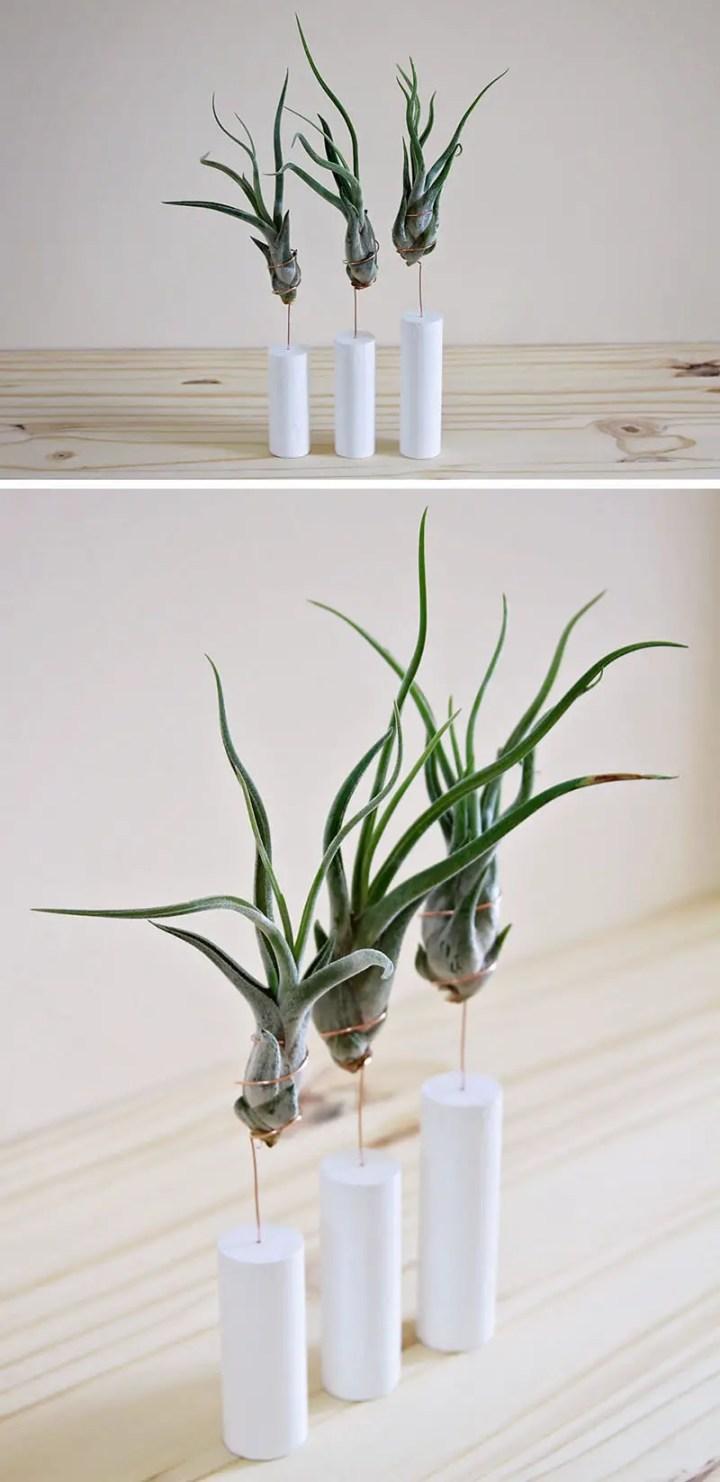 decoruri elegante cu plante care cresc fara pamant Elegant ways to display air plants in your home 12