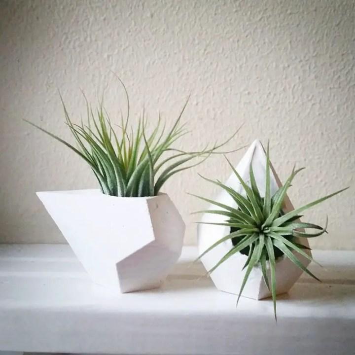 decoruri elegante cu plante care cresc fara pamant Elegant ways to display air plants in your home 13