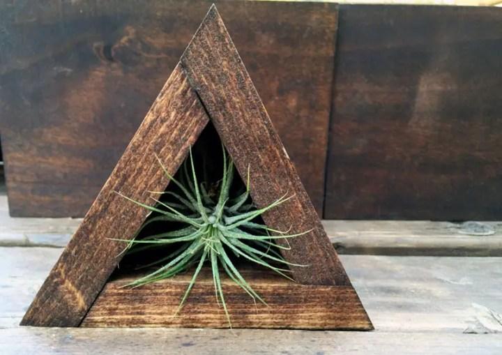 decoruri elegante cu plante care cresc fara pamant Elegant ways to display air plants in your home 3