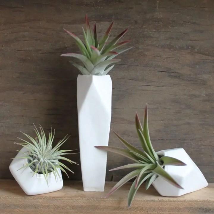 decoruri elegante cu plante care cresc fara pamant Elegant ways to display air plants in your home 5