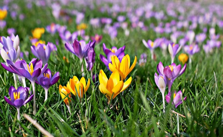 flori de pus toamna in gradina branduse