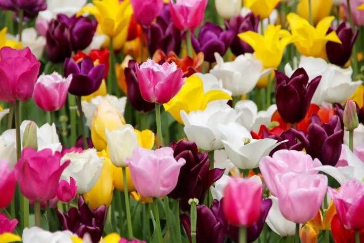 flori de pus toamna in gradina lalea