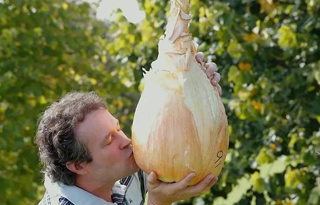 cele mai mari fructe si legume din lume ceapa