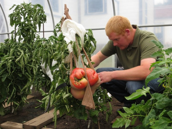 cele mai mari fructe si legume din lume rosie