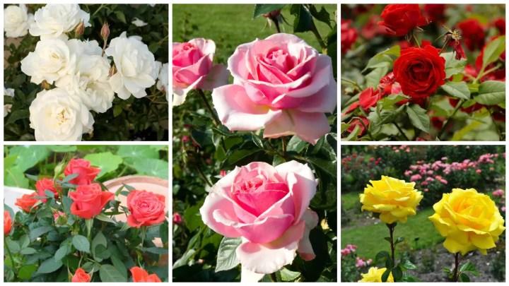 flori care se planteaza primavara