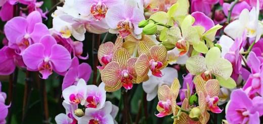 orhideea - ghid complet de ingrijire