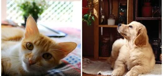 cum cureti parul lasat de caine sau pisica