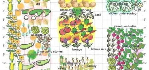 cum asezam legumele in gradina