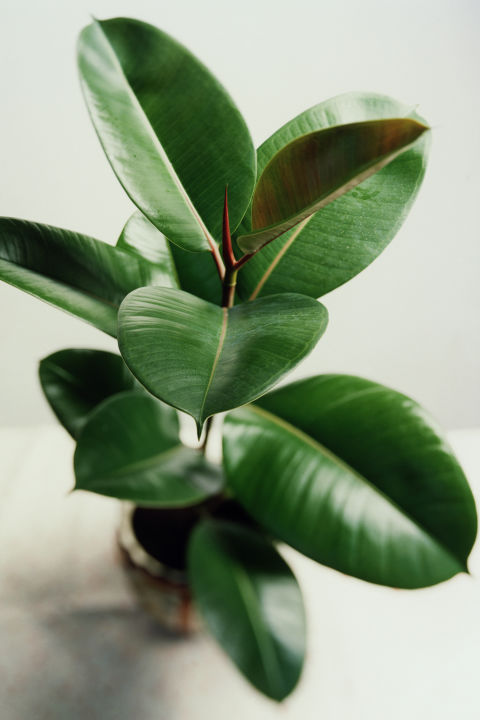 plante pe care nu le poti omori