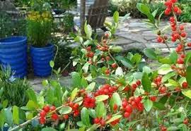 fructe de padure in gradina 1