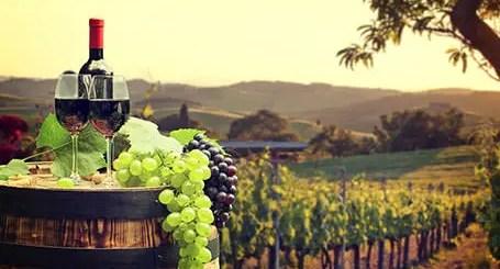 soiuri de struguri pentru vin autohtone