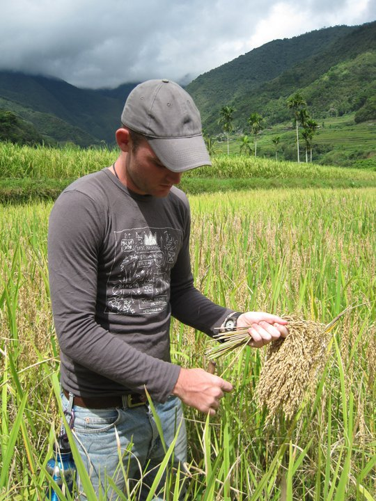 Harvesting rice in the Filipino mountains.