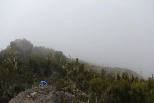 A picture to show how foggy it gets on Kilimanjaro around rainy season