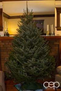 The tree we purchased for Christmas 2012