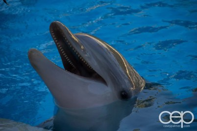 Siegfried & Roy's Secret Garden and Dolphin Habitat — Dolphin