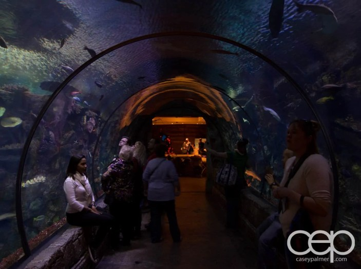 Shark Reef Aquarium at Mandalay Bay — Hallway