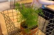 Scarborough Dishcrawl II — Naan & Kabob — Table Plant
