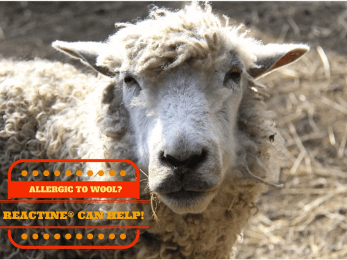 REACTINE® || Allergic to Wool?