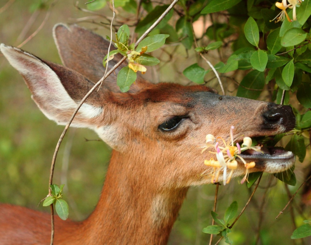 Plant This Not That! Plants That Deer Won't Eat