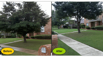casey tree service experts residential pruning